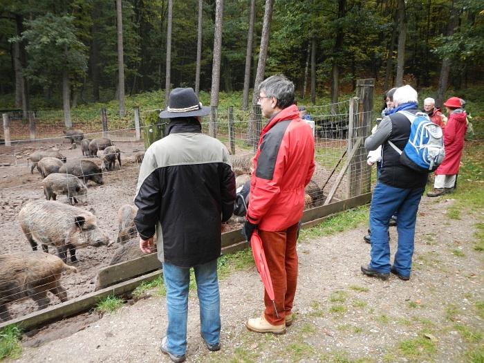 2015_10_18 12_50_22-KVN-Wanderung-Heidenberg